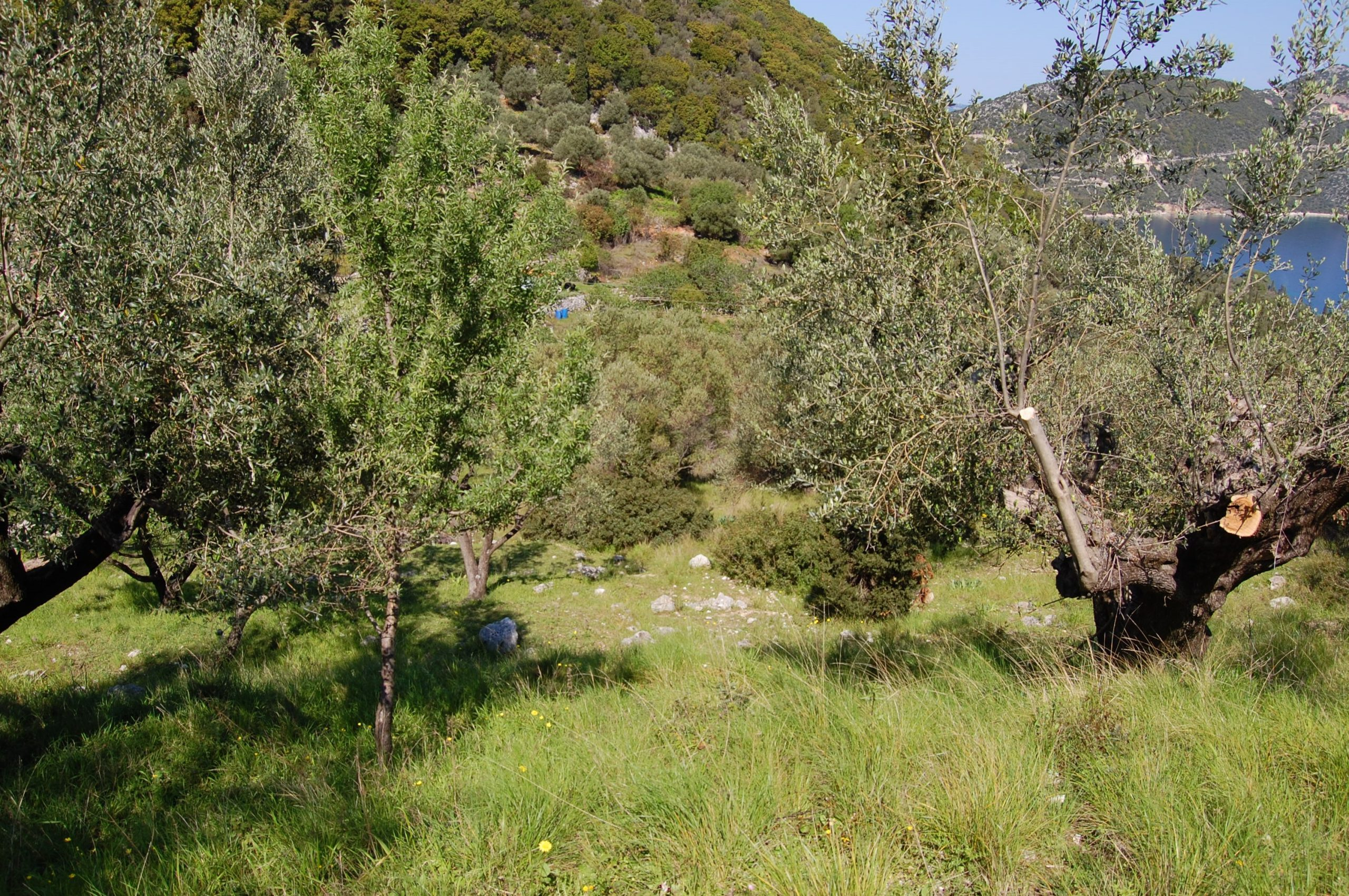 Exterior view of land for sale in Ithaca Greece
