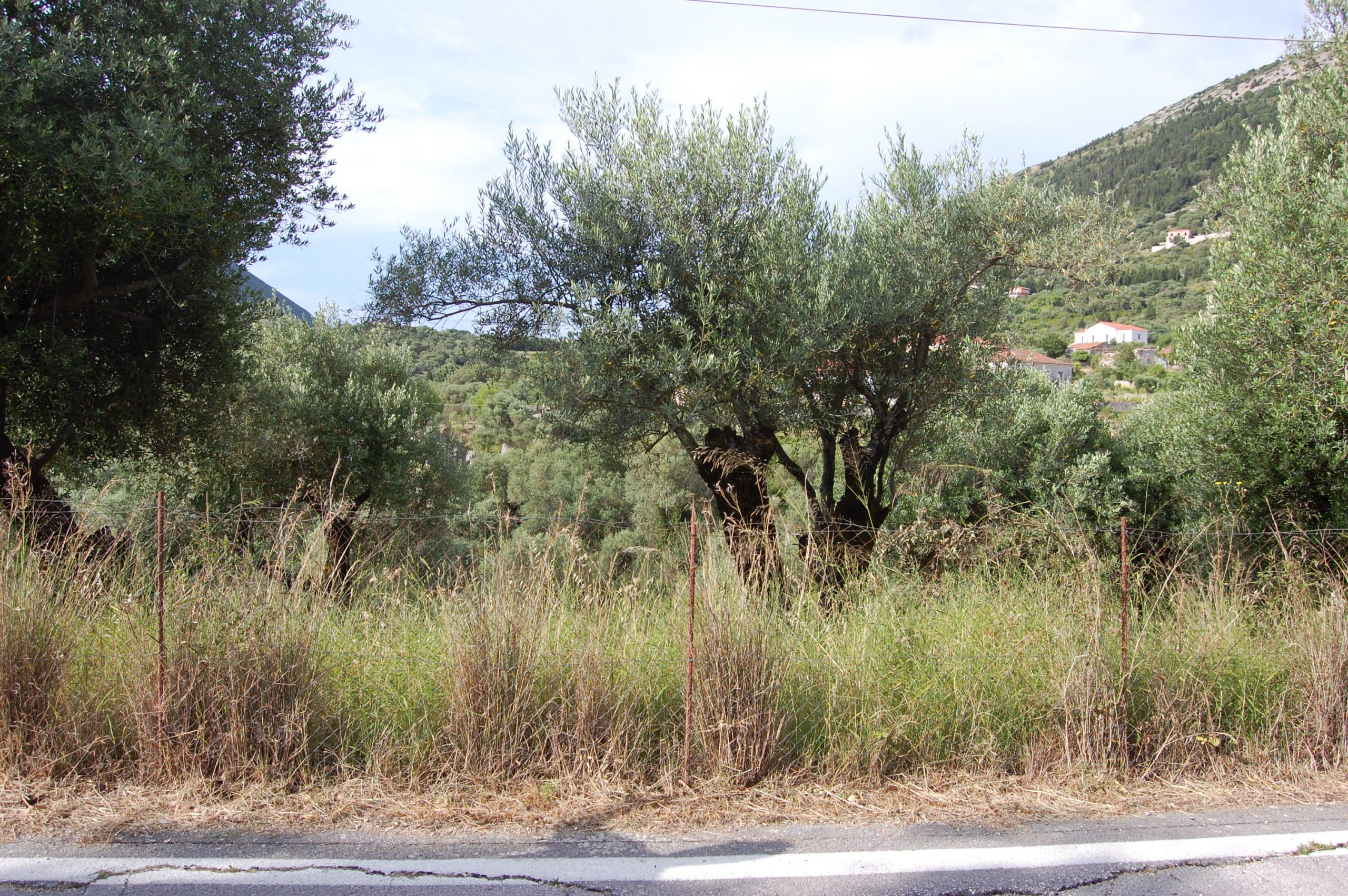 Landscape view and terrain of property for sale in Ithaca Greece Platrithya village